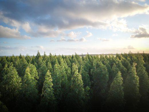 Día mundial del medio ambiente: reforestando los bosques